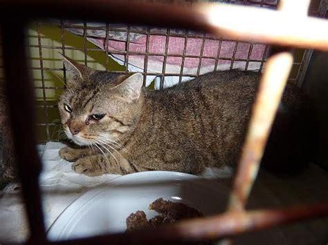 ufficio tutela animali torino gatto investito in via torino ecco cosa prevede il