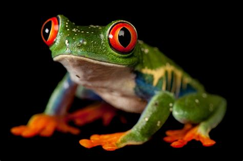 gorgeous pictures remind   frogs