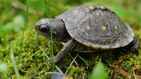imagenes tiernas de tortugas tiernas tortugas bebes youtube