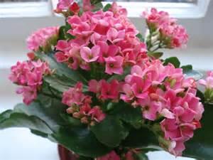 house plant archives the dorset finca