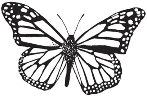 West Virginia Department Of Commerce Coloring Fun Monarch Butterfly Coloring Page