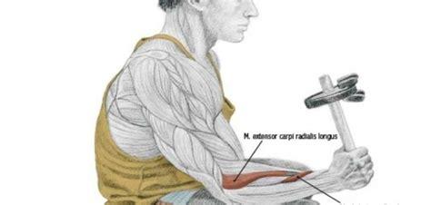 neutral dumbbell wrist curl bodybuilding wizard