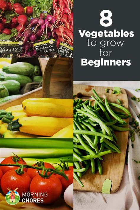 Garden Vegetables To Grow 8 Easiest Vegetables To Grow Even If Don T Gardening