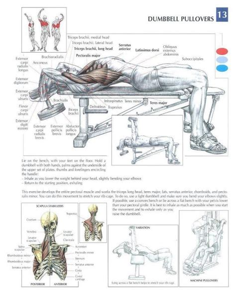 anatomy of a workout chest workout workouts