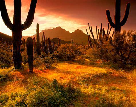 desert wall murals desert wall murals pyramid south western desert murals your way