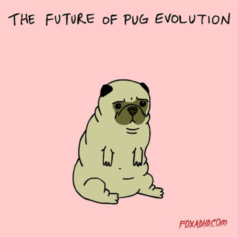 pug evolution animation high def gif