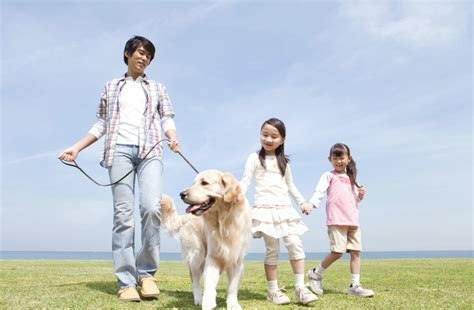Choosing The Best Dog Breed For Your Family And Children   dog breed features to consider how to choose the best
