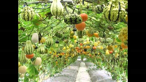 home vegetable gardening ideas home vegetable garden ideas