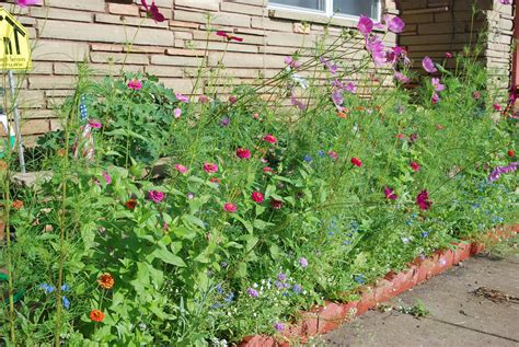 plant beds how to plant a hummingbird flower bed garden guides