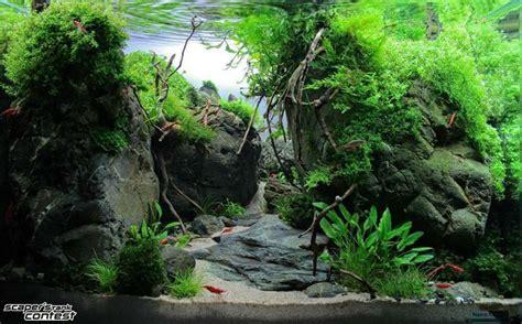 setup aquascape best 25 corner aquarium ideas on pinterest fish tank