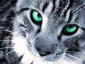 cat silver warriors of cat rp members