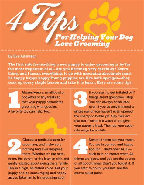 puppy basics the fundamentals of farm tips revealed