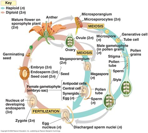 biography definition in biology biology pictures november 2011