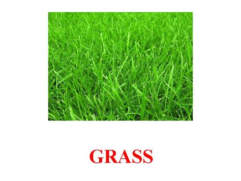 How To Make Paper Out Of Grass - how to make grass out of tissue paper grosir baju surabaya