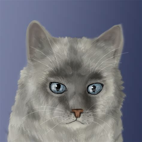 Dust Cat birman cat by speck of dust on deviantart