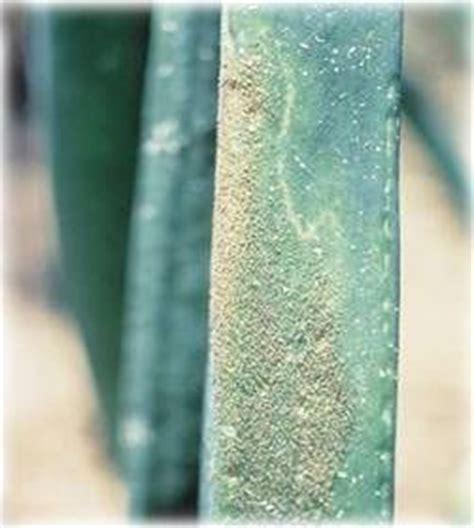 Benlox 50 Wp cara menanam daun bawang sarana agri