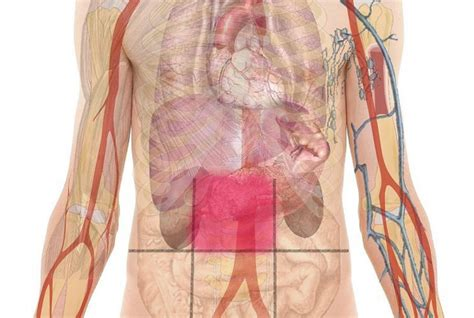 abdominal pain map health