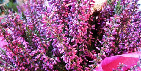 fiori autunno inverno fiori autunnali 7 piante colorano l autunno