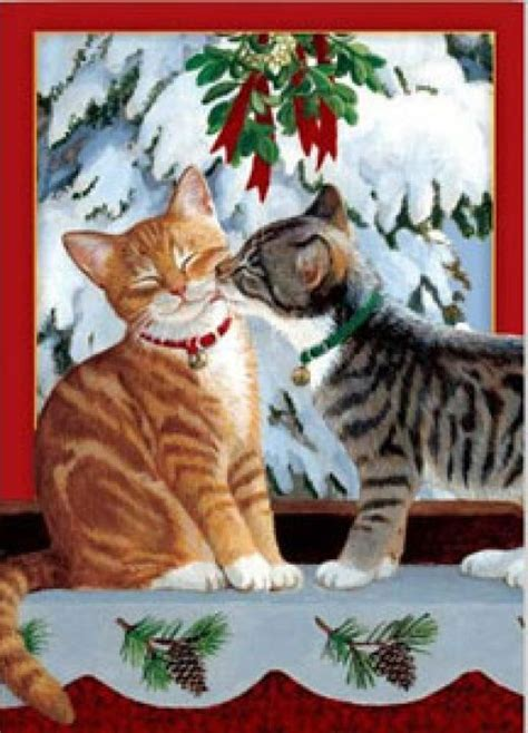 funny image collection  funny christmas cat pictures