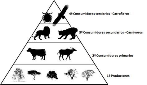 cadenas troficas clasificacion cadena alimenticia definici 243 n tipos elementos