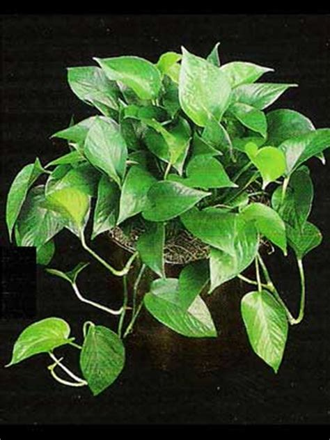 good low light plants indoor plants gallery the potted plant scottsdale