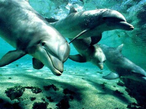 los animales marinos al habitat naturales habitat acu 225 tico