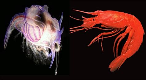 misteri film larva ilmuwan pecahkan misteri quot larva monster quot media informasi
