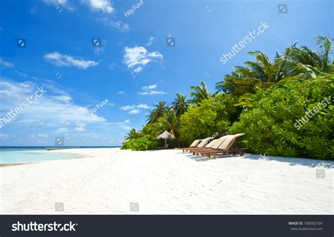 overdue in paradise the library history of palm county books beautiful tropical paradise in maldives with palms hanging