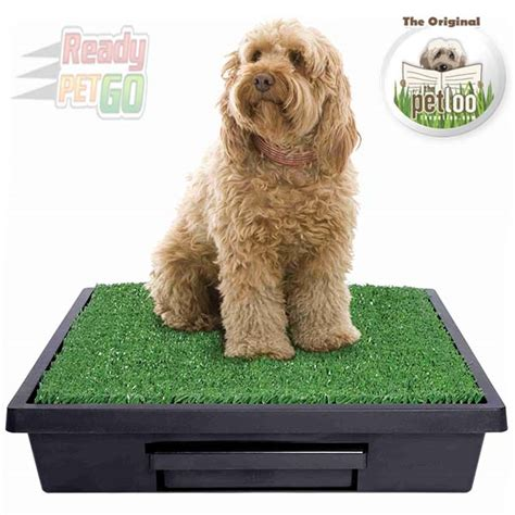 Why Do Dogs Wee In The House 28 Images The Pet Loo Medium Size Mini Wee Portable