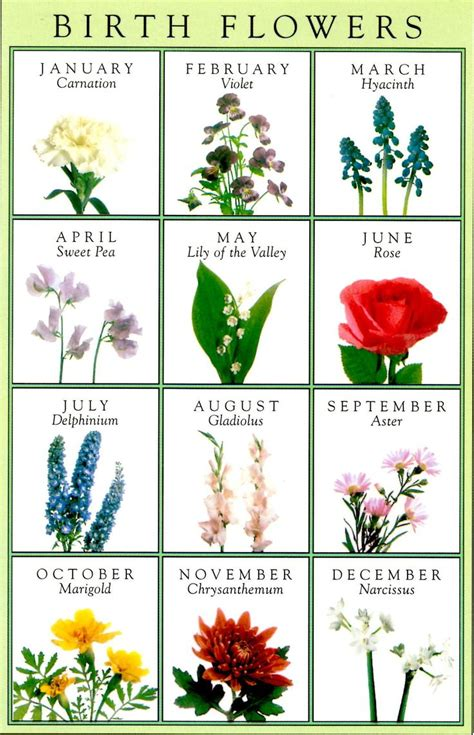 birth flowers greeting card horoscopes birthstones