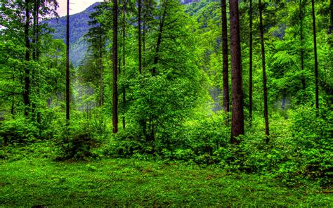 forest green green forest wallpapers hd pictures