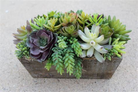 Whats New At The Succulent by Wonderful Faux Succulent Arrangements Ideas 11 Wartaku Net