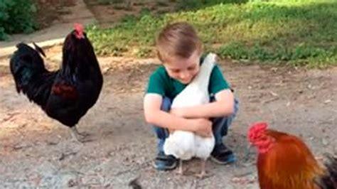 dibujos niños jugando con animales ni 241 o abraza a gallina los animales tienen sentimientos