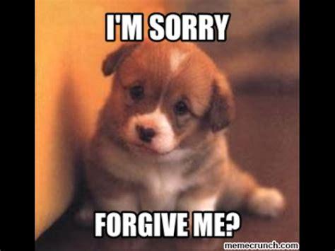sorry puppy im sorry sparks