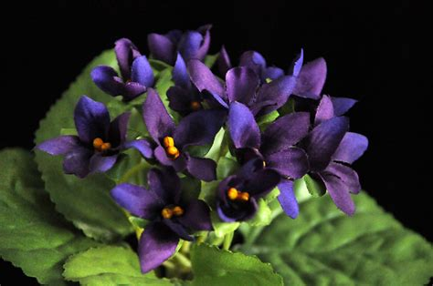 fiori viola evergreens artificial flowers and ornamental plants