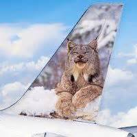 Frontier Airlines Sweepstakes - 1000 images about fly frontier on pinterest