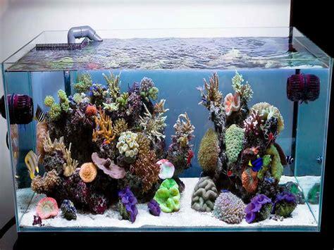 Saltwater Aquarium Decorations by Decoration Saltwater Aquarium Design Ideas Black