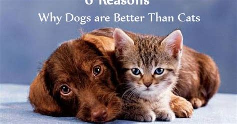 are cats or dogs better 6 reasons why dogs are better than cats neat pets dogs