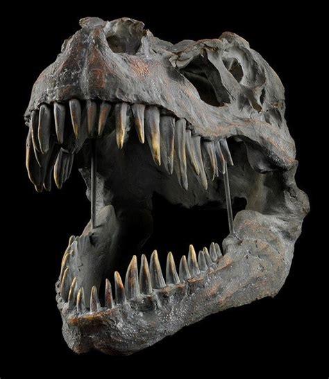 dinosaurier schlafzimmer accessoires totenkopf tyrannosaurus rex gro 223 dinosaurier sch 228