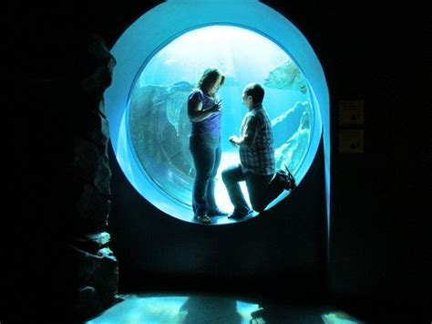 Georgia Aquarium Gift Card - 17 best images about weddings engagements at georgia aquarium on pinterest unique