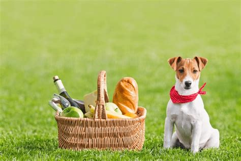 human food dogs can eat dogsbreedscenter best breeds pictures information and reviews