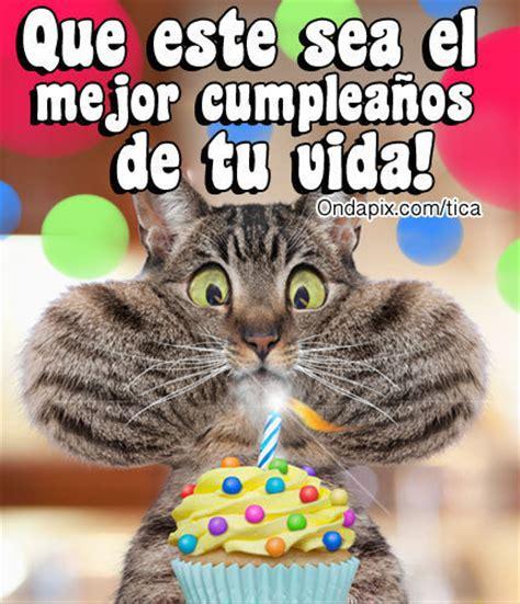 imagenes de happy birthday con gatos gatos feliz cumplea 241 os imagui