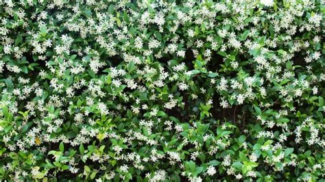 climbing plants perth climbers can add charm and protection to any garden