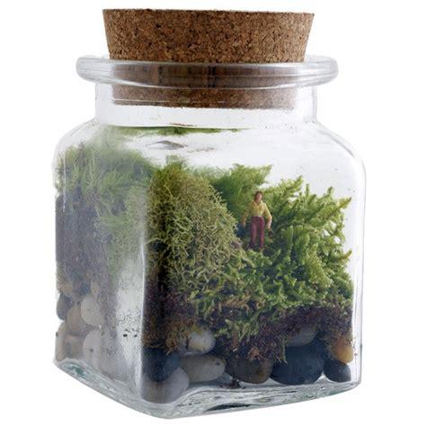 terrarium le best 25 twig terrariums ideas on terranium