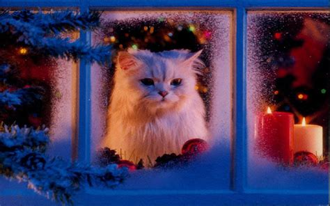 wallpaper cat christmas free download christmas pets hd wallpapers in 1280x800