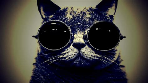 wallpaper cat with sunglasses bamf cat with sunglasses lomo hd wallpaper hot