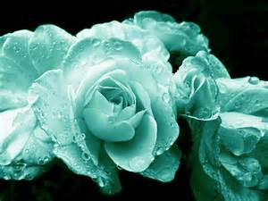 teal colored flowers teal roses with raindrops photograph by jennie schell