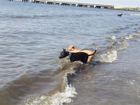 beaches that allow dogs any beaches that allow dogs in south jersey atlantic city city live in