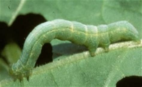 types of garden worms all about worms what are the different types of green