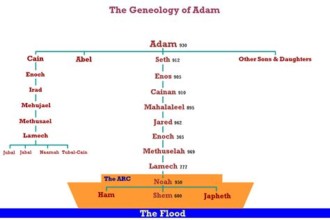 printable family tree of adam and eve file geneology adam gif wikimedia commons